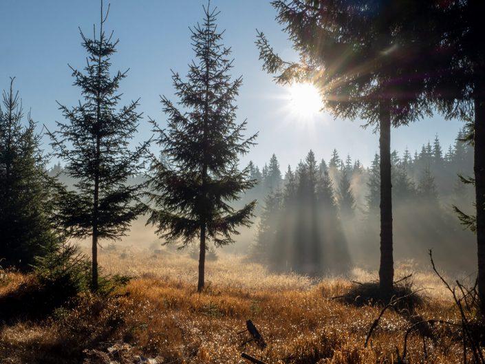 Naturfotografie Nordwald