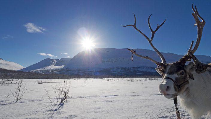 Landschaft Fotografie Rentier