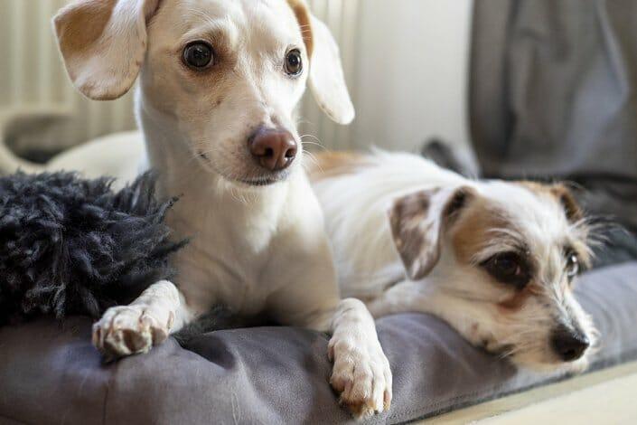 Porträtfotografie - Foto zwei Hunde Porträt