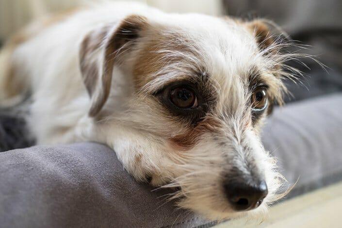 Foto Hund Porträt