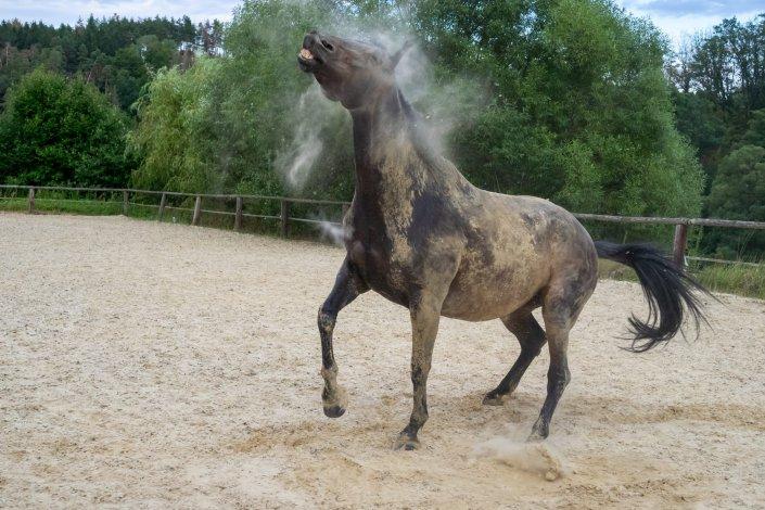Fotografie Pferd schüttelt Sand ab