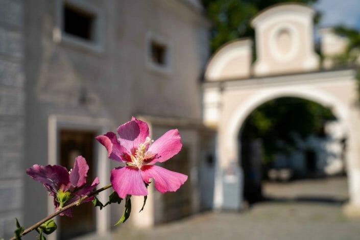 wedding location in Austria in Mautern